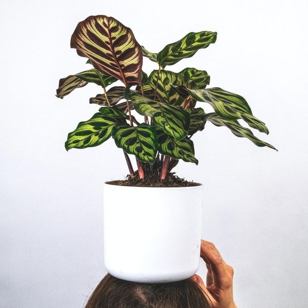easy house plants that are hard to kill
