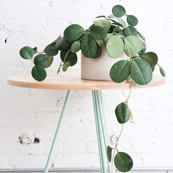 The 12 Best (and Easiest!) Indoor Plants for Winter