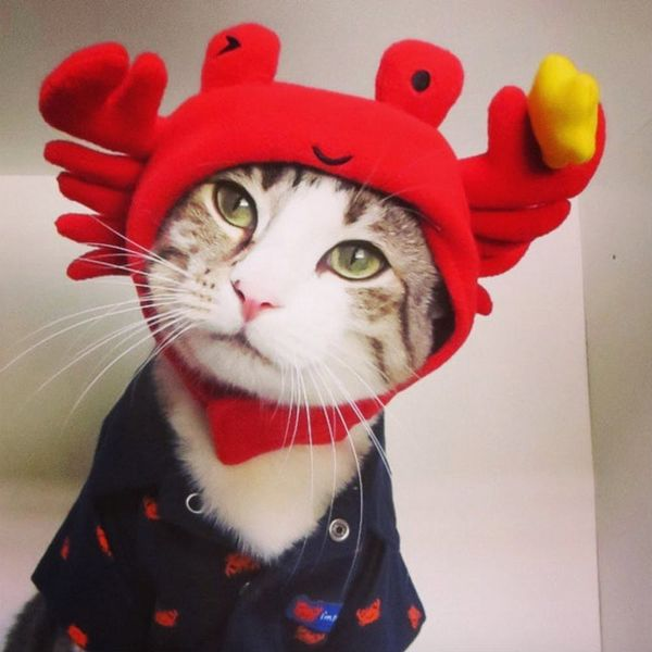 50 Cat Halloween Costumes That Are Purr-fect