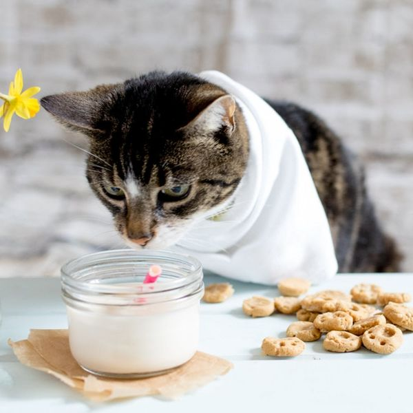Your Cat Will Love These Paw Print Treats