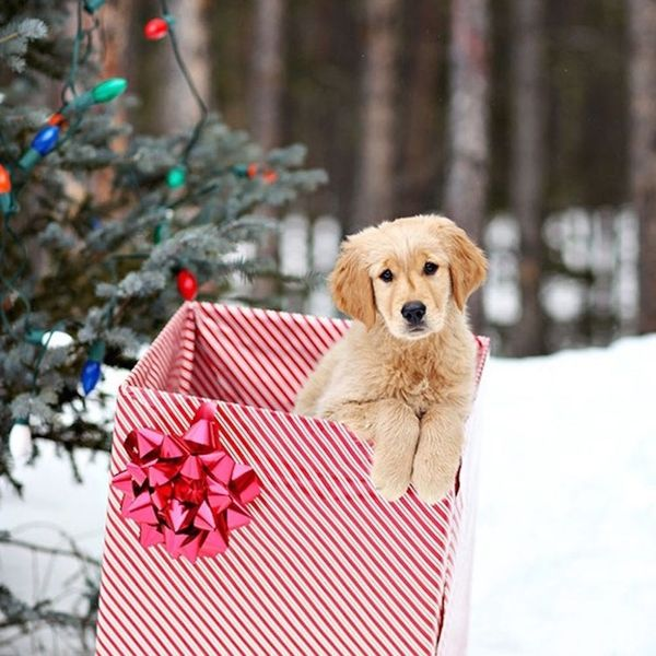 19 Christmas Cards Ideas for Your Pets