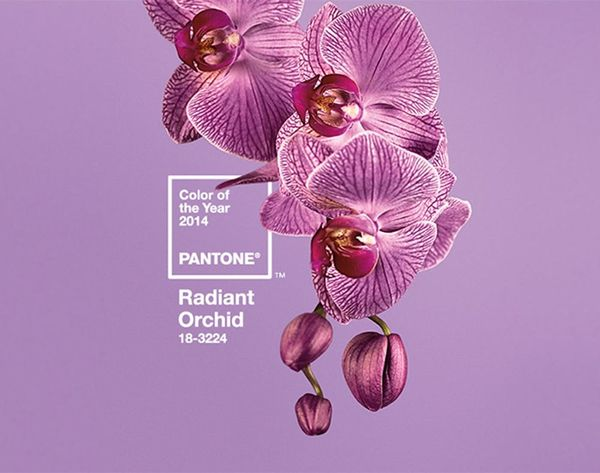 And Pantone's Color of the Year for 2015 Is…