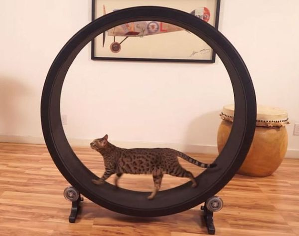 This Cat Exercise Wheel Just Raised Over $285,000