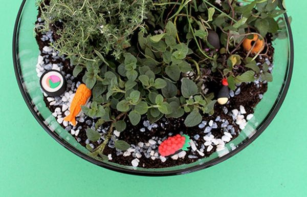Create Your Own Herb Terrarium Centerpiece