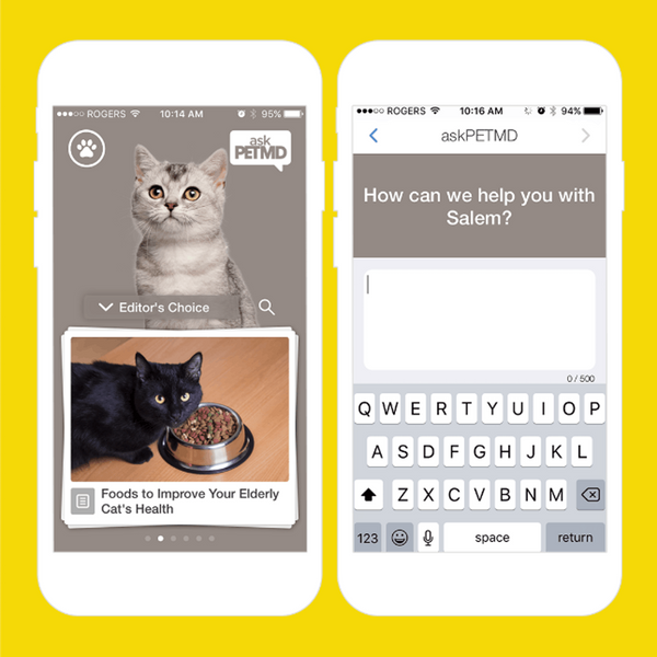 10 Apps for Every Cat Lady *Obsessed* With Her Furry BFF